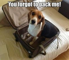 "Dog in suitcase says ""Don't forget to pack me"""