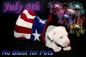 July 4th is no blast for pets