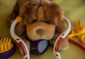toy dog with stethascope