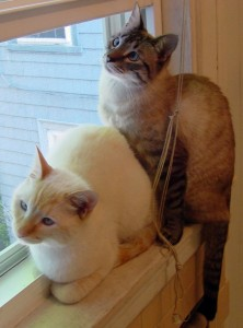 two cats on a window sill