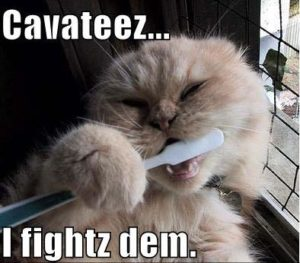 "cat brushing its own teeth with text that says ""cavities...I fights them"""
